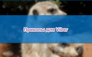 Ищем приколы для Viber, как рассмешить друга